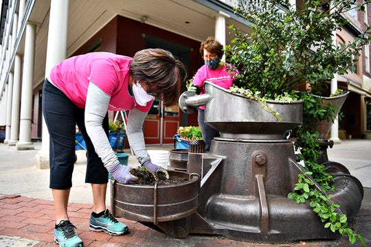 Kim Keesee, left, of Manchester Township, and Elaine Yates, of York Township, pull weeds and trim a yew shrub at the intersection of West Market and Beaver Streets as the Garden Club of York members work to fill planters and try to practice social distancing as they effort to beautify downtown York City, Thursday, May 14, 2020. Dawn J. Sagert photo