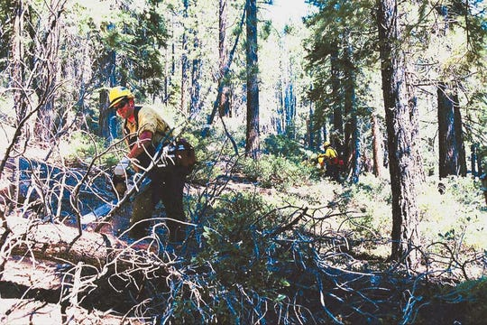 Forest thinning in the Lake Tahoe basin in 2007.