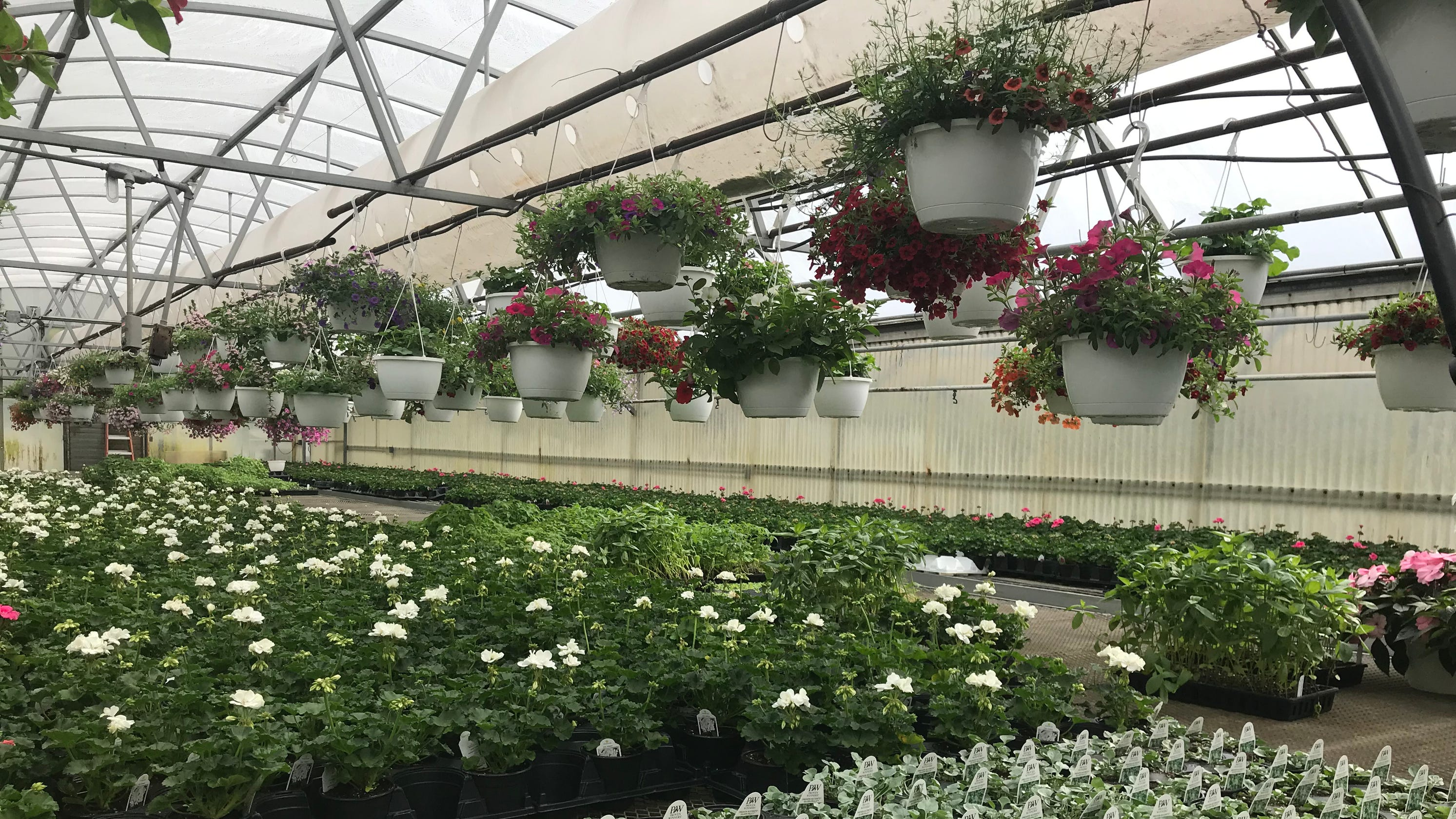Garden Centers Are Open In Rochester