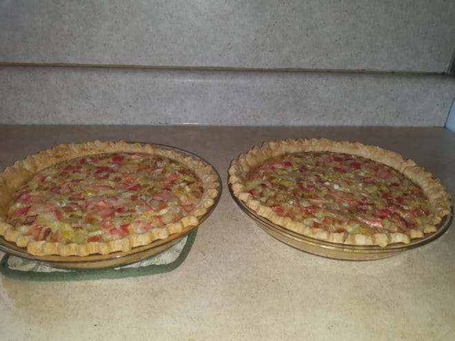 Lovina's rhubarb custard pies cool after baking.