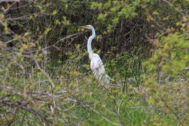 Even with the cancellation of the Biggest Week in American Birding in 2020, there were plenty of birds and birders to be found at popular sites like Ottawa National Wildlife Refuge, Sheldon Marsh State Nature Preserve and Old Woman Creek State Nature Preserve.