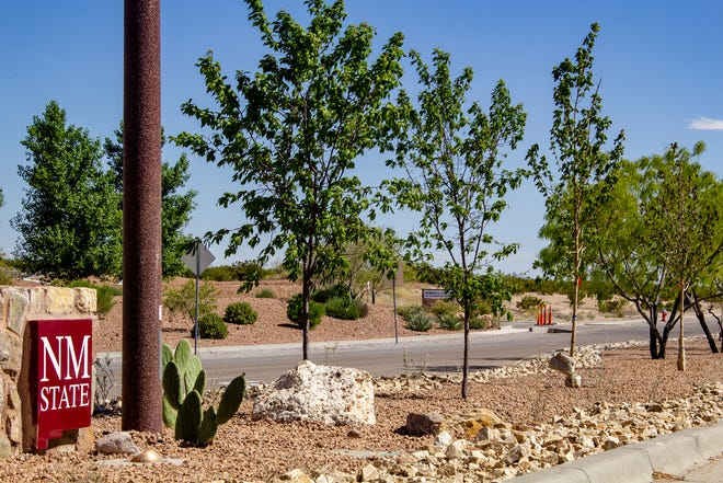 The sign guiding visitors and staff to Arrowhead Park is framed with Mesa Glow maples. Three Mesa Glow maples were planted at the Arrowhead Drive sign location, and more will be added in the months and years ahead along the length of the street's median.