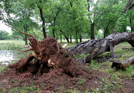 Trees were uprooted or had limbs ripped off by the thunderstorm Saturday, May 16, 2020, in Lucy Park.