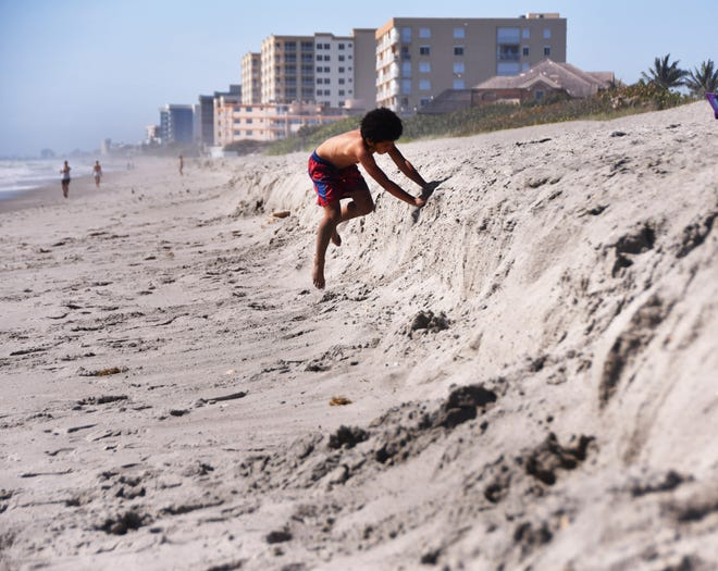 There has been some erosion of the sand brought in this winter and spring for the mid- reach sand project. In Satellite Beach, seven year old Benjamin Ludwig tries his best to make it up the cliff of sand at Hightower Beach. Some have complained that the turtles can't make it up the cliff to lay their eggs.