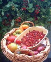 A platter of slow roasted tomatoes is nestled among heirloom tomatoes.