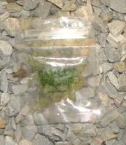 "A bag of marijuana, stamped with the words ""Smelly Proof,"" which West York Borough Police say is connected with the Nov. 20, 2013 shooting death of William Terrell, 37."