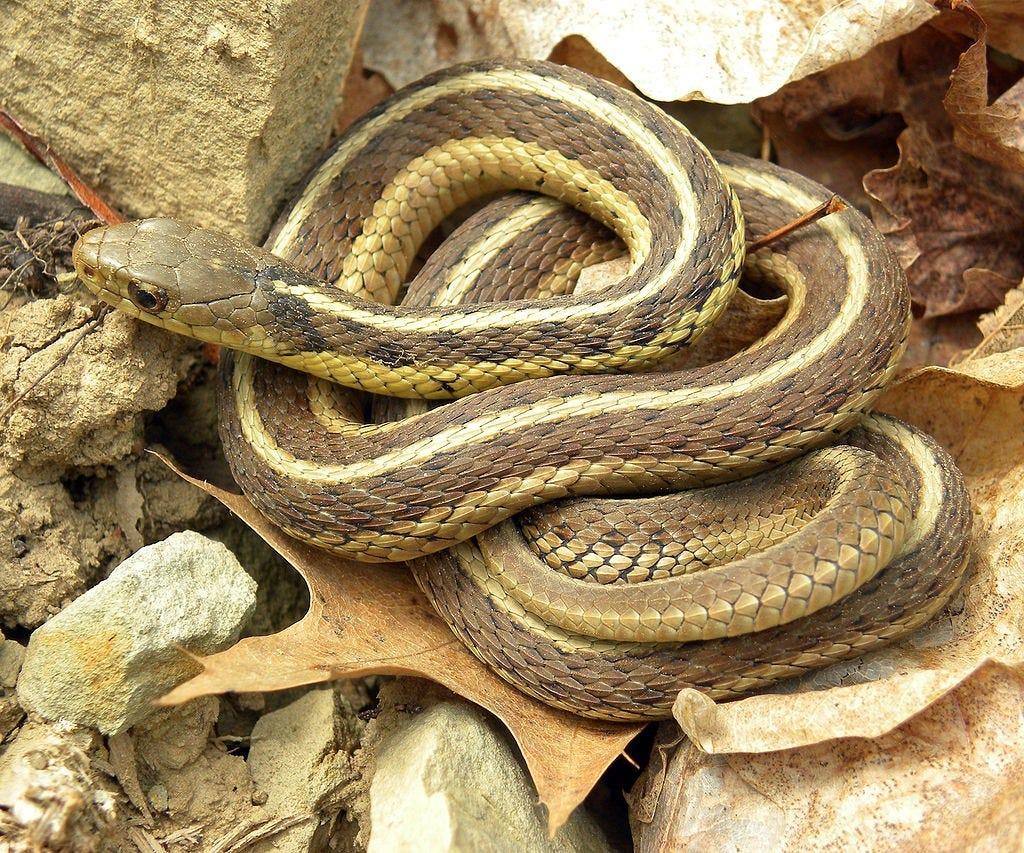 Ken Baker Risk Of Death From Snake Bite Is Relatively Low
