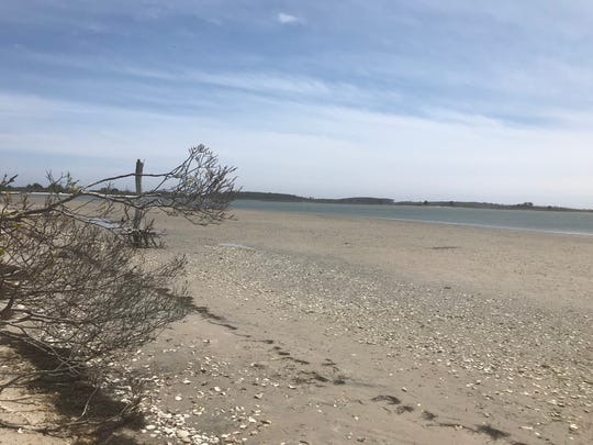 A very low tide renders the bay side of Assateague Island nearly unrecognizable May 19, 2020.