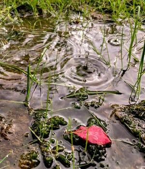 A burst of rain wetted Visalia on Monday, May 18, 2020.