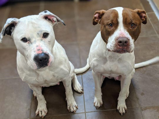 David James Goodburn adopted Nori, left, and Brie, right in late March. Police said Goodburn starved the dogs to death in his apartment. They were found in May.