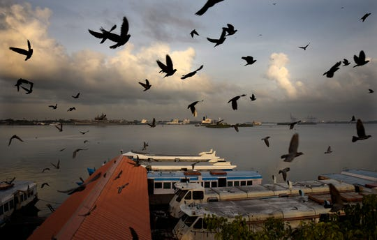 Pigeons fly at the Ernakulam boat jetty as state run boats start plying after lying idle for nearly two months due to the lockdown to curb the spread of coronavirus in Kochi, Kerala state, India, Wednesday, May 20, 2020.