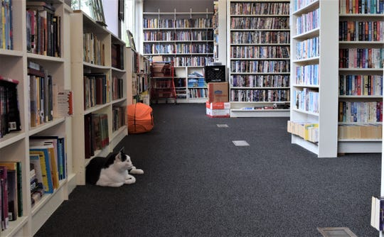 Dickens the cat keeps an eye on customers in the Paperback Exchange on Tuesday, May 19. His owner, and the owner of the store, Leanne McClellan said requiring customers to wear masks and sanitize their hands was necessary to help make people feel comfortable and to minimize exposure.