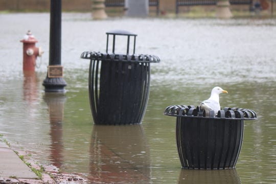 A seagull rests in a bin on the north end of downtown Port Clinton along the Portage River, much of which was under water again this week due to several days of rain topping off already high lake levels.