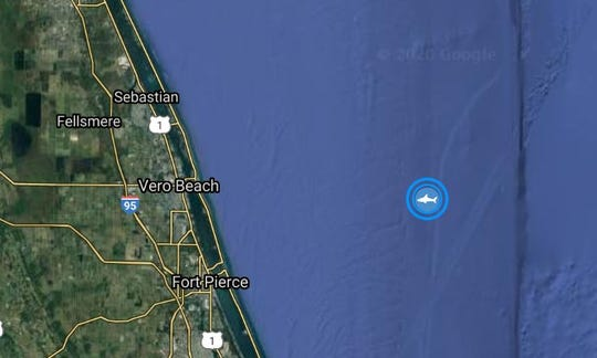 Miss May, an 800-pound female great white shark, pinged just offshore of Vero Beach Tuesday night, May 20, 2020.