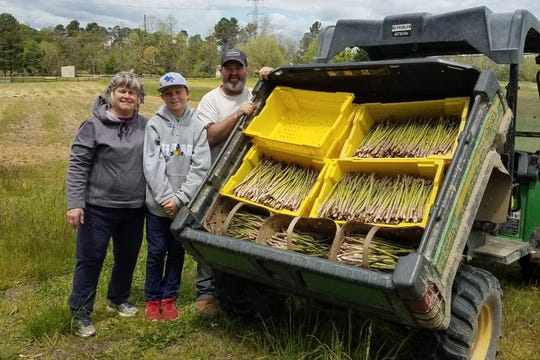 The Filasky family harvests asparagus on their farm in Middletown.