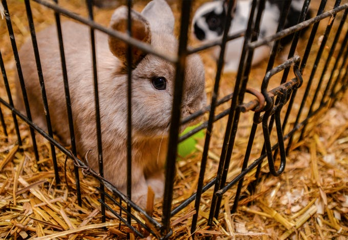 176 animals including rabbits were seized from Pamela Jo Polejewski who has been charged with animal cruelty after authorities found the animals while responding to a fire that gutted a trailer and outbuildings on Polejewski's property in early May.