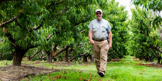 Keith Wise on his Chilton County peach farm near Clanton, Ala., on Wednesday May 20, 2020.
