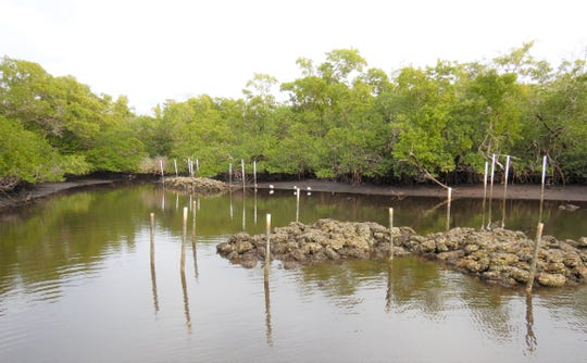 A view of the oyster reef restoration site at the mouth of Rock Creek in Naples.