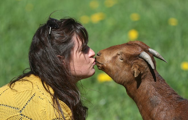 Becky Engert is greeted by one of the goats, Lynlin, at the families KB White Farms in Conesus. The farm's top products are natural soaps, lotions and scrubs made from all natural ingredients.