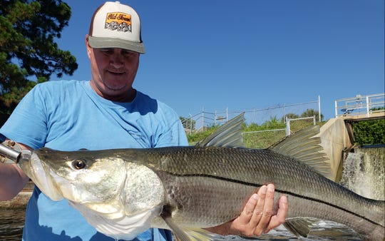 Big snook, like this 38-incher caught and released by TCPalm outdoors writer Ed Killer, can still be caught near spillways, but will soon be in larger numbers near the inlets. Snook season ends May 31.