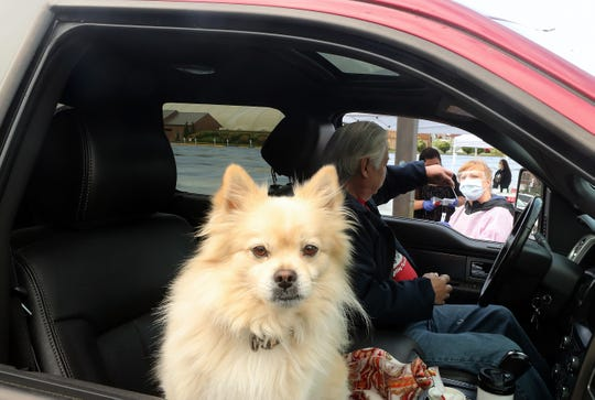 Truman gazes out the passenger window as owner Ricardo Gonzales hands registered nurse Sarah Shaw his swab iat the Port Gamble S'Klallam Tribe's drive-thru COVID-19 testing in the parking lot of The Point Casino & Hotel on Thursday, May 21, 2020.