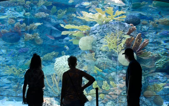 The USS Lexington and the Texas State Aquarium reopen, Friday, May 22, 2020. Both locations closed because of coronavirus in mid-March.
