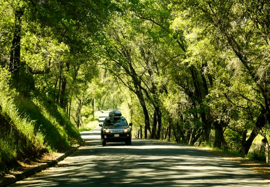 Six Mile Road in the heart of Gold Country provides a scenic drive through a canopy of trees in the town of Murphys, Calif. In the time of coronavirus, more people are looking at car trips as opposed to flying.