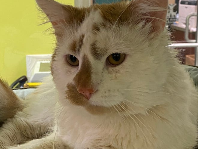Sketti is waiting for a new family at the Oshkosh Area Humane Society.