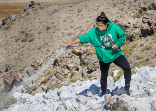 """Jennifer Vargas, a Yerington High School senior, helps paint the """"Y"""" during Y Hill Cleanup Day."""