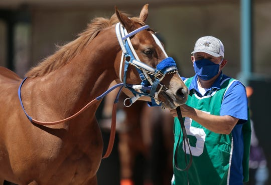 A horseman holds a quarter horse during a trial race at Ruidoso Downs on May 22. The horseman was required to wear a face mask as New Mexico reopened live racing.