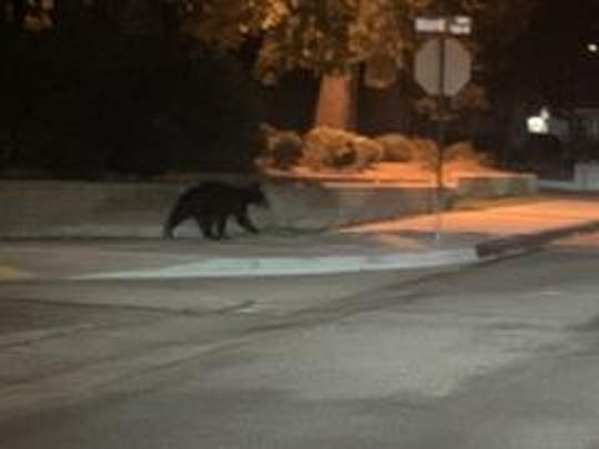 Police found a small, black bear wandering around a Simi Valley industrial park early Friday morning.