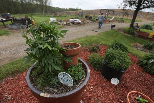 Denise Taylor-Spiker walks through her herb gardens at Spiker Springs Herbs and Antiques near Adamsville.