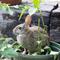 8 ways to keep garden pests under control