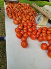 Tomatoes at last year's Dell Rapids Farmers Market. The first Farmers Market this year is scheduled for July 25 at the city park.
