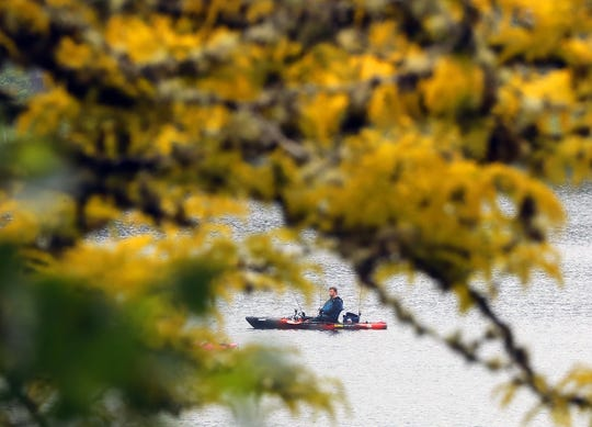 An angler in a kayak is framed by the yellow leaves of a tree on the shore of Bremerton's Kitsap Lake Park on drizzly Tuesday, May 26, 2020.