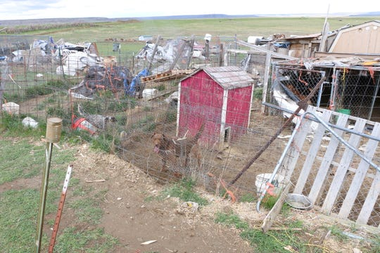 A dog looks out of an enclosure on Pamela Polejewski's property west of Great Falls. Polejewski has been charged with aggravated animal cruelty after 176 animals were seized by the Cascade County Sheriff's Office.