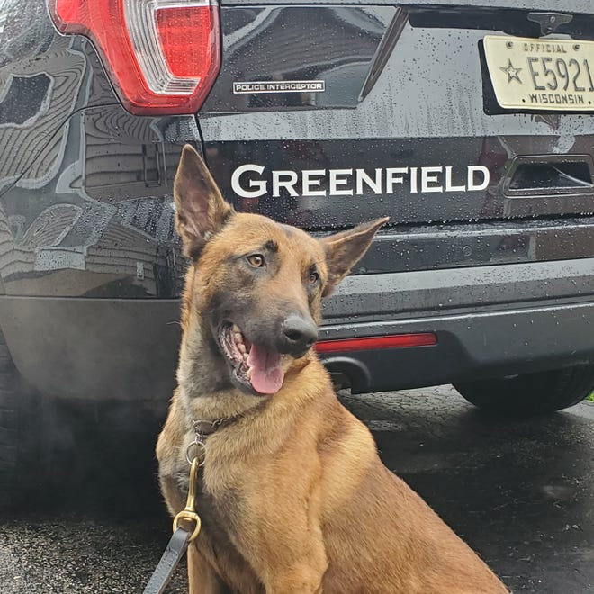Teller, a Belgian Malinois, is the Greenfield Police Department's new K-9 officer. Teller was purchased with funds raised by the Dan Jansen Family Fest. He'll be a patrol and narcotics K-9 with the department.