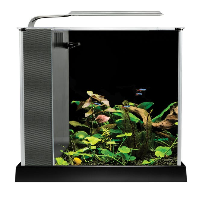 Tiny aquariums like this one from the Hagen Group don't take up much space and are easy to maintain.