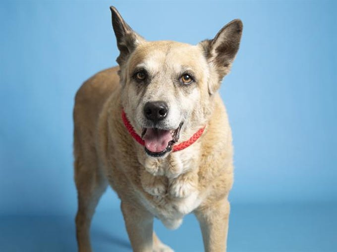 Interested adopters can view available pets, like Moose, and schedule an appointment online at azhumane.org/adopt.