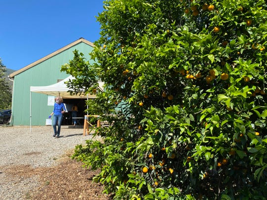 A customer leaves the Churchill Orchard barn in Ojai with an order placed through the farm's new Cyber Farmers Market for Locals website.