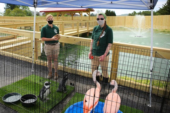 Animal Adventure Park in Harpursville will re-open to foot traffic on May 30, 2020 with the drive-thru zoo operating one morning a week.