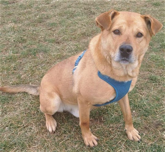 Tyson is looking for a new home.