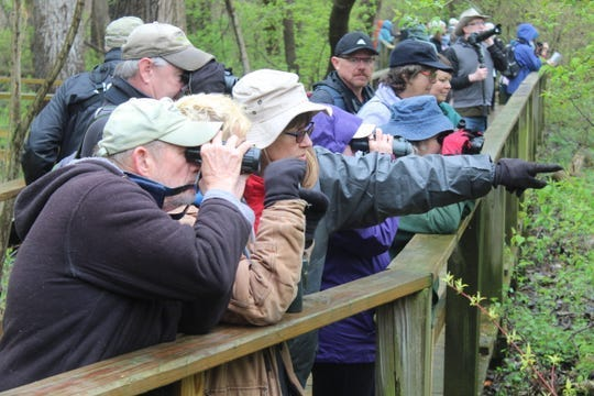 These birders were camped out on Magee Marsh Wildlife Area's boardwalk near Oak Harbor during the 2019 Biggest Week in American Birding. Magee Marsh has been closed since March and the Ohio Department of Natural Resources has not announced a date when the popular Ottawa County park will reopen.