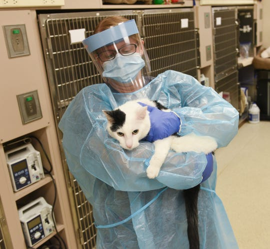 Jennifer Adamek shows her new protective gear Wednesday, May 27, 2020, at BluePearl Pet Hospital in St. Cloud.