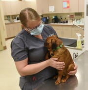 Jennifer Adamek looks at her dog Wednesday, May 27, 2020, at BluePearl Pet Hospital in St. Cloud.