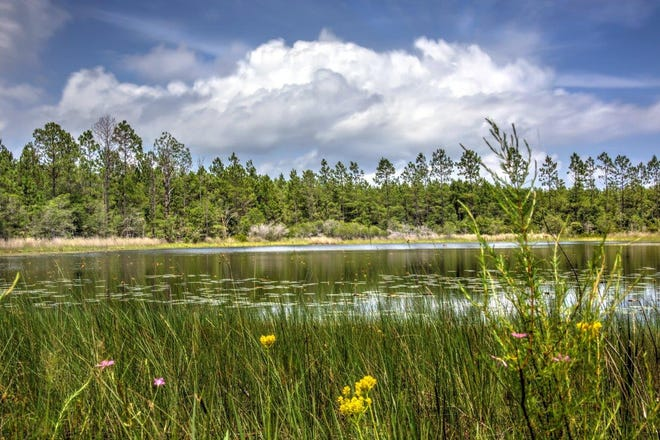 A freshwater pond inside an area called the St. Teresa Bluffs, which was acquired Thursday as protected conservation land using Florida Forever funding.