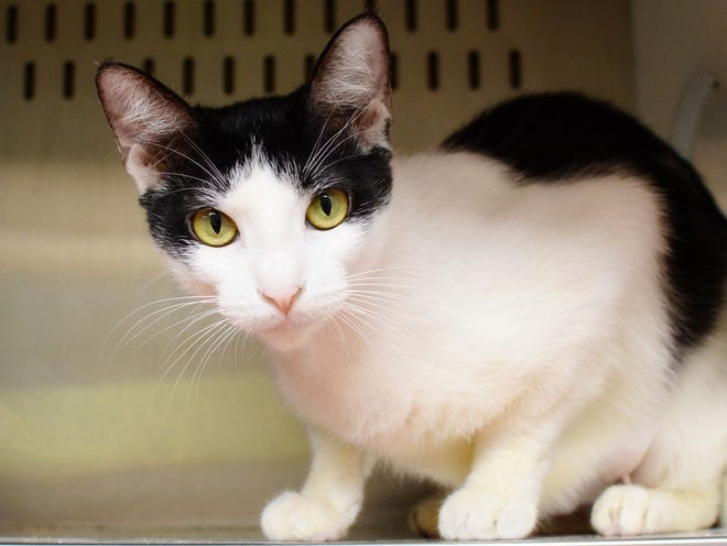 Towanda is ready to come home with you.
