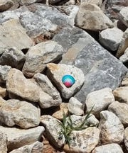 Not limited to rocks, people are painting shells, pine cones and other things to hide for others to find. Hiding and finding painted rocks is providing socially distanced fun during the coronavirus situation.