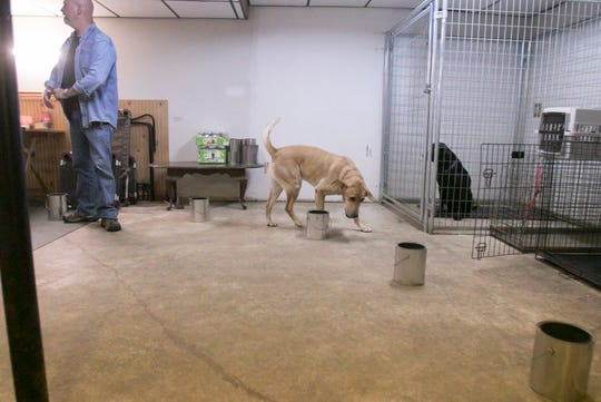 A Labrador retriever named Rudy follows a circular arrangement of mostly empty cans, sniffing for the scent of bed bugs in the basement of Jack and Lori Grigg's Tyrone Township home Friday, May 29, 2020. Once he reaches the target can, Rudy recognizes the scent he's been trained to find and sits down abruptly next to it.