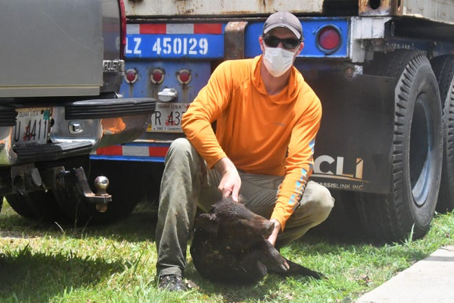 Bunter Michael Orr  with the second pig he killed in the Marbo Cave area as part of the Guam Pig Hunting Derby 2020. There were 106 feral pigs harvested in the event, held May 30-31.